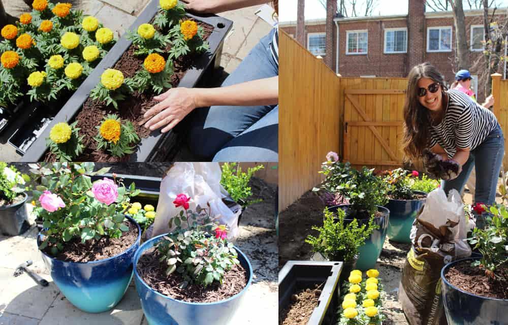 Backyard and patio makeover plants