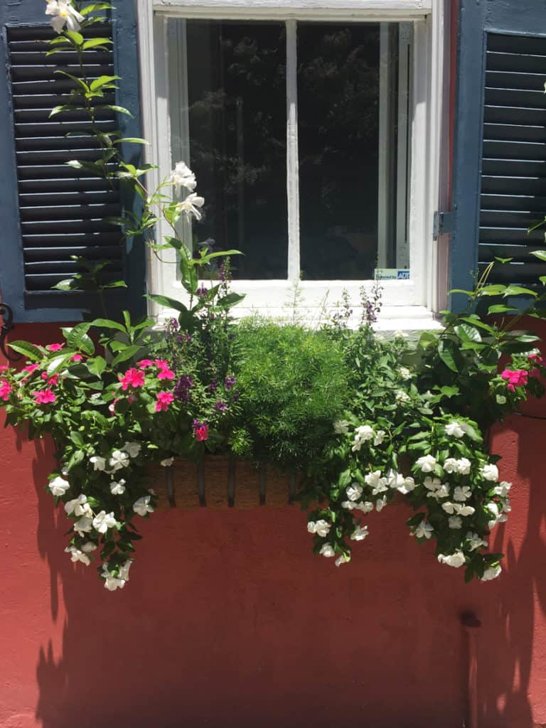 Charleston Window Boxes Red Building Pink Flowers