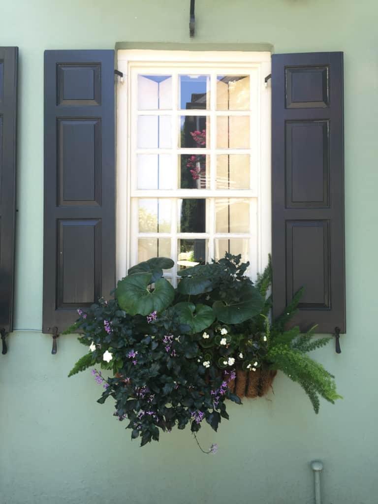Charleston Window Box Green Monochromatic
