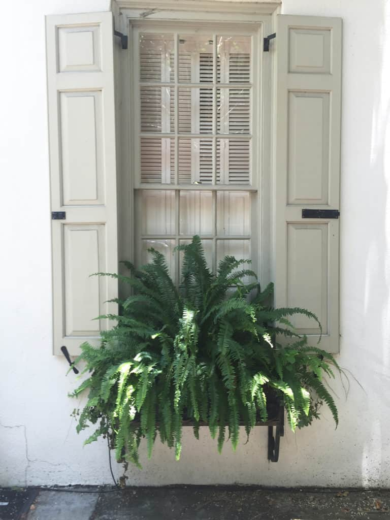 Charleston Window Box Fern Pop of Green