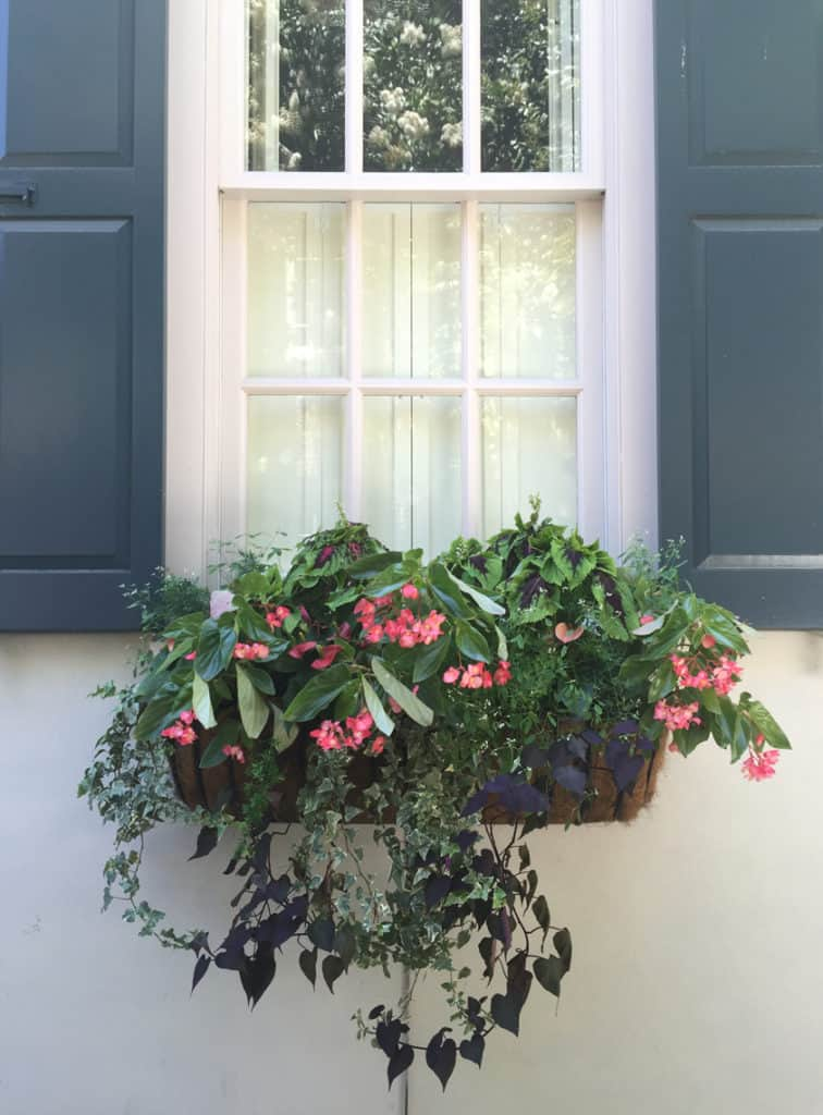 Charleston Window Box Blue Shutters