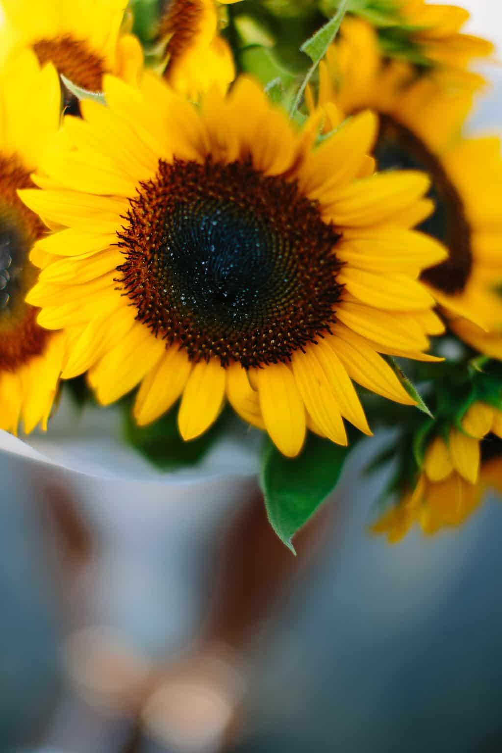 Family-Day-at-the-Davidson-Farmer's-Market-sunflower