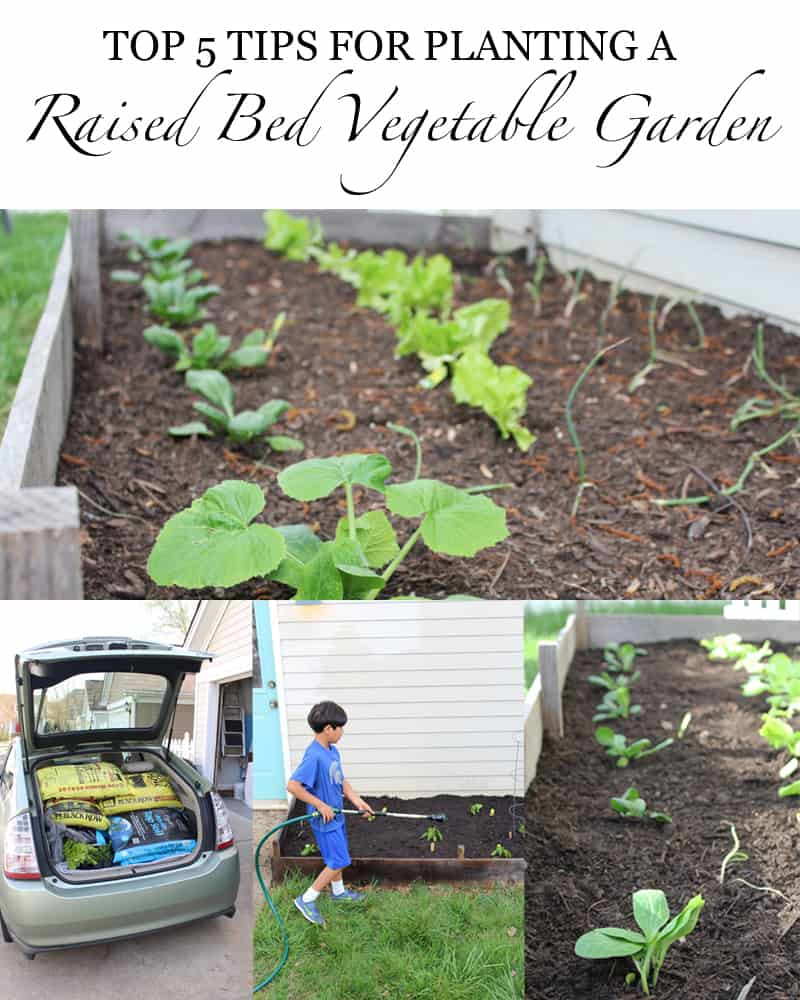 Top 5 Tips For Planting A Raised Bed Vegetable Garden - gardening