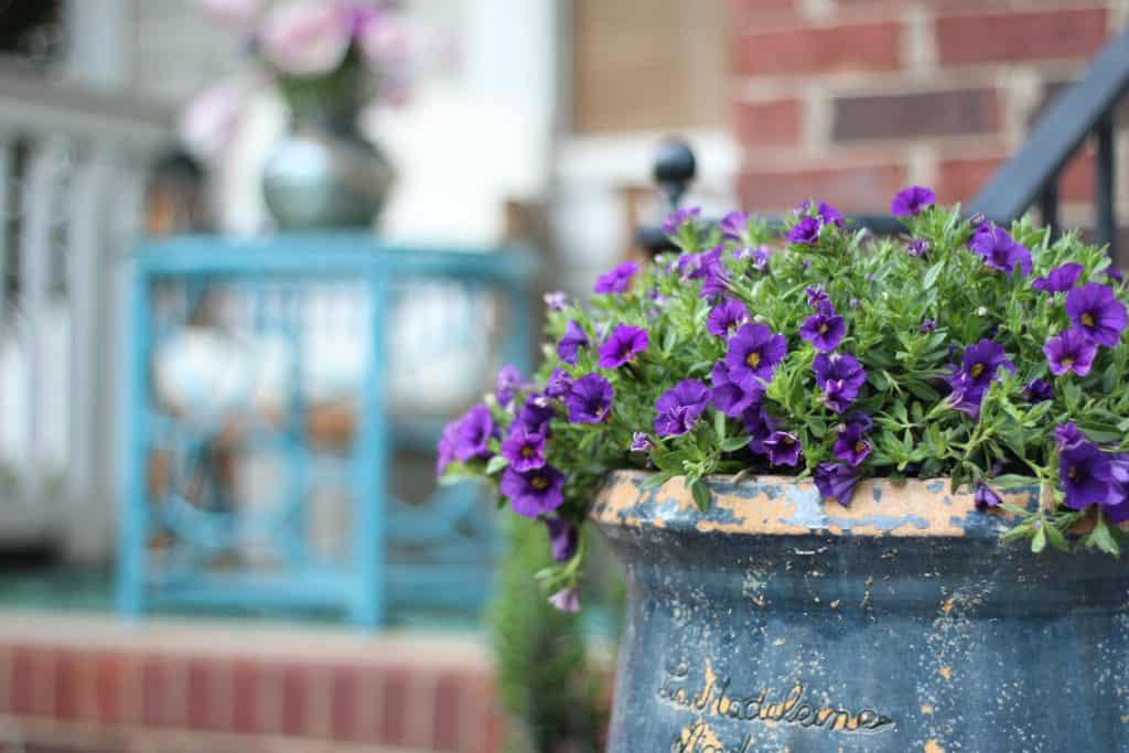 Top 5 Friday: Our Favorite Easy Outdoor Plants trailing vinca