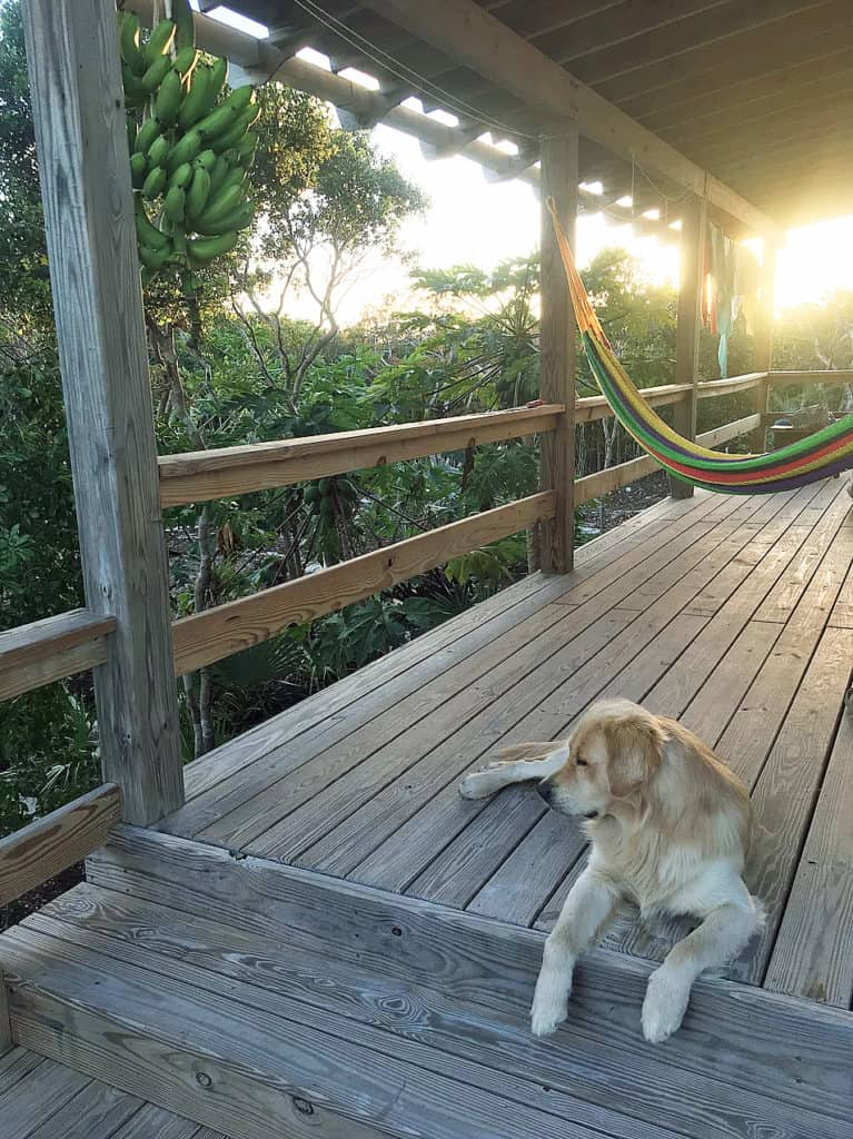 Home of the Month: Beautiful Bahamian Home (For Sale) dog