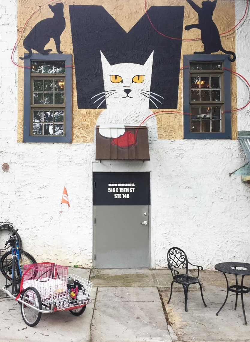Local Spotlight: Mac Tabby Cat Cafe - Charlotte, NC out back