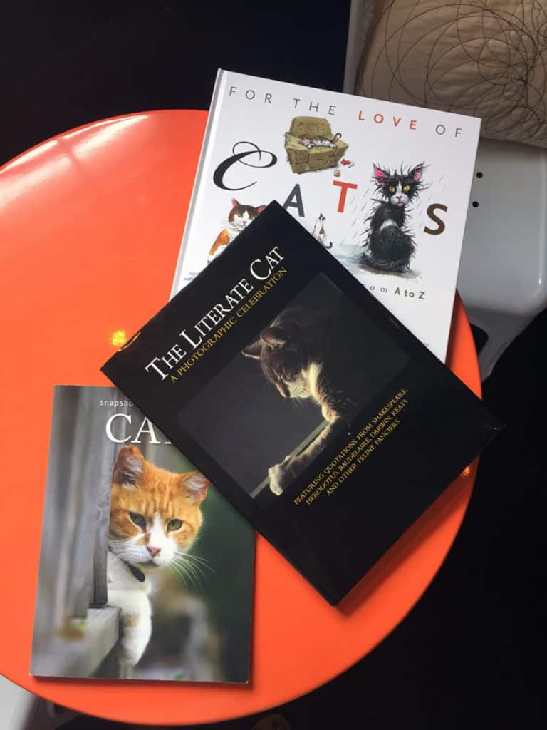 Local Spotlight: Mac Tabby Cat Cafe, Charlotte, NC books