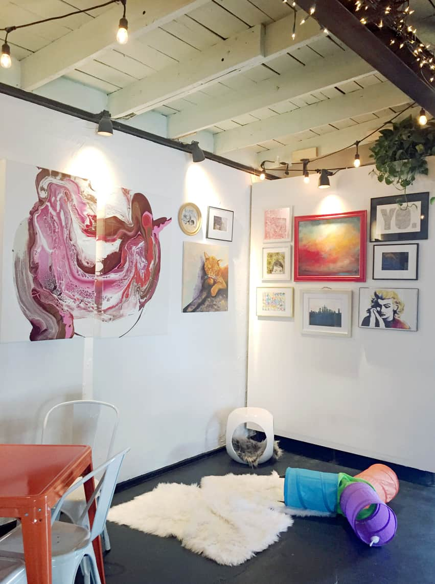 Local Spotlight: Mac Tabby Cat Cafe, Charlotte, NC cat room