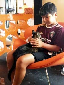 Local Spotlight: Mac Tabby Cat Cafe, Charlotte, NC loving