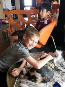 Local Spotlight: Mac Tabby Cat Cafe, Charlotte, NC boys