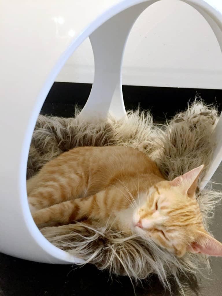 Local Spotlight: Mac Tabby Cat Cafe, Charlotte, NC sleeping