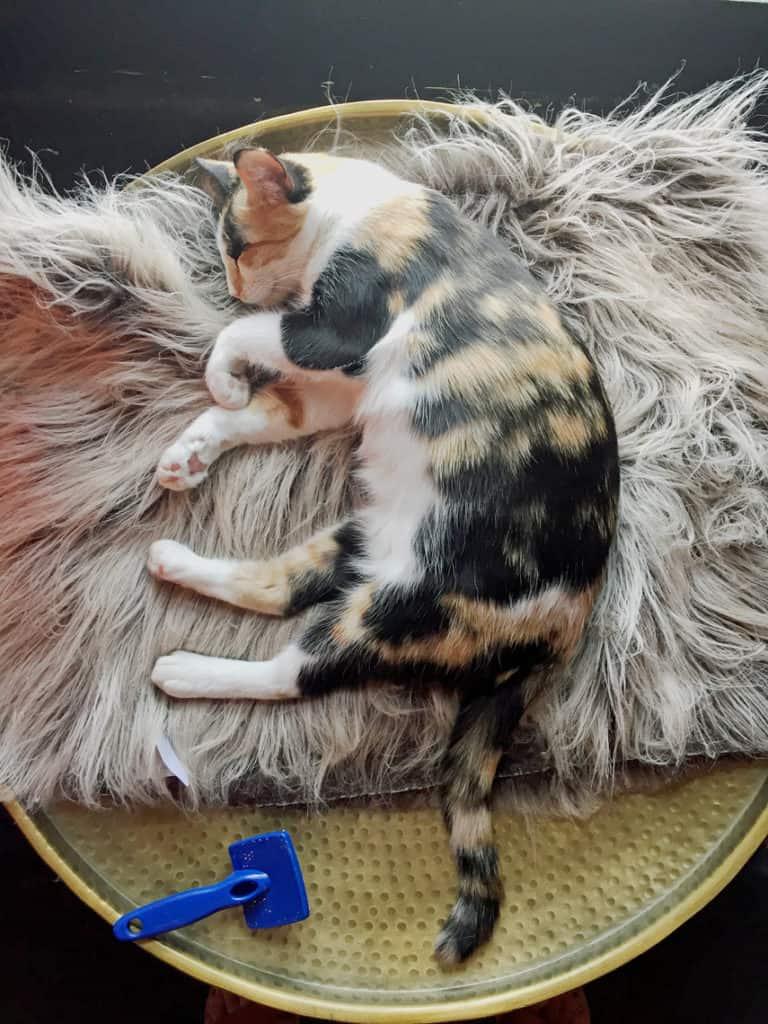 Local Spotlight: Mac Tabby Cat Cafe, Charlotte, NC sleeping 2