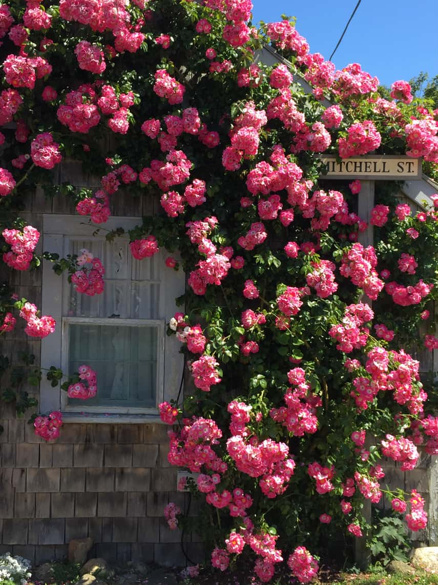 Nantucket Travel Guide: Stay, See, Eat, Do 119