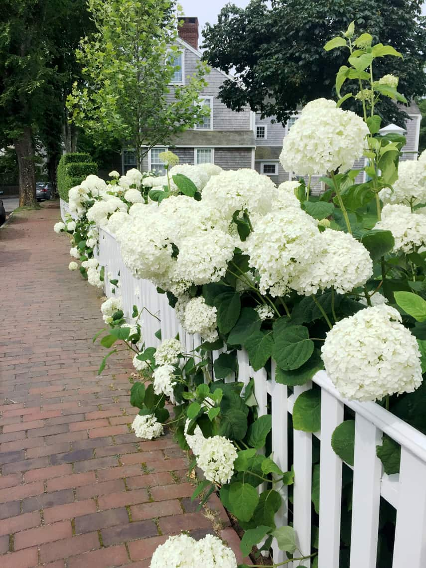 Nantucket Travel Guide: Stay, See, Eat, Do 1