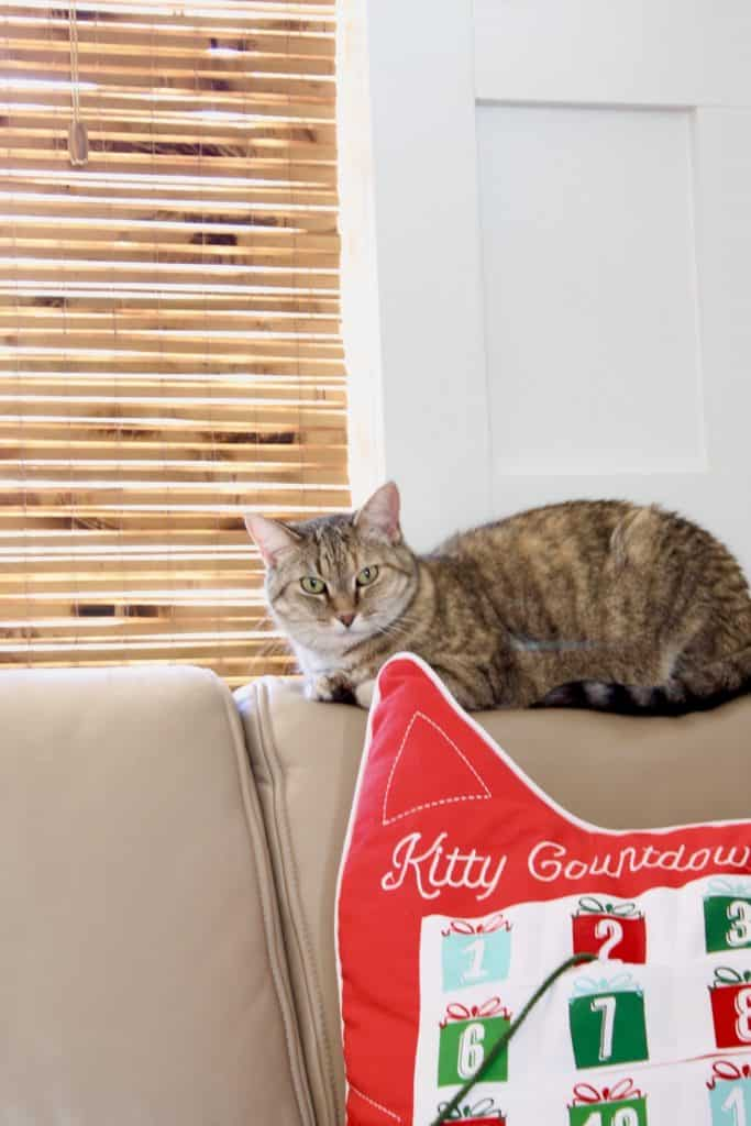 Christmas living room shrimp the cat